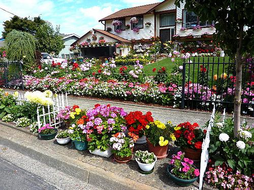 Flowers For Home Garden Picture 2018